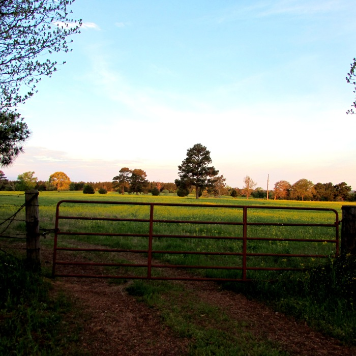 sunrise field gate