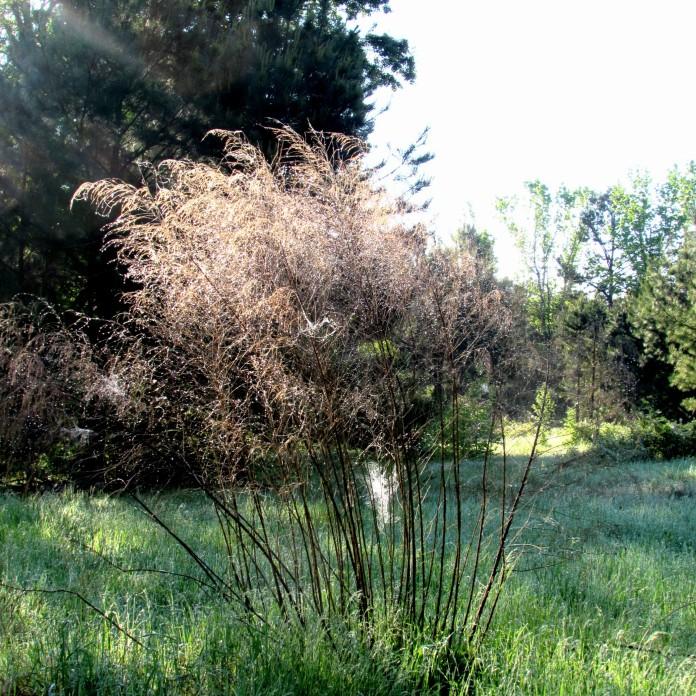 walk bush