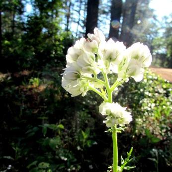 walk flower