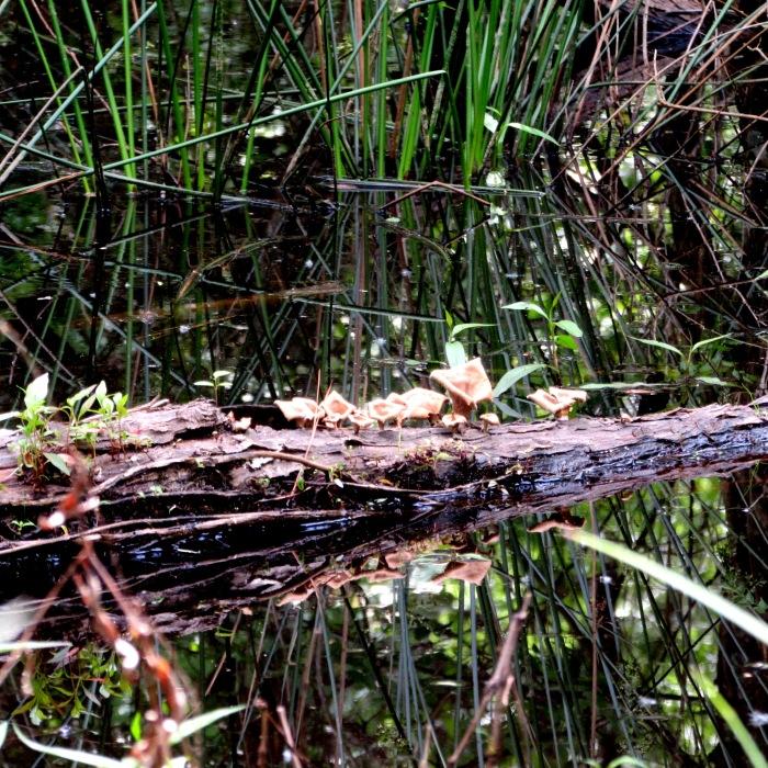 walk swamp
