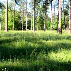 walk forest