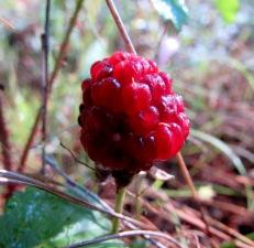 walk berry