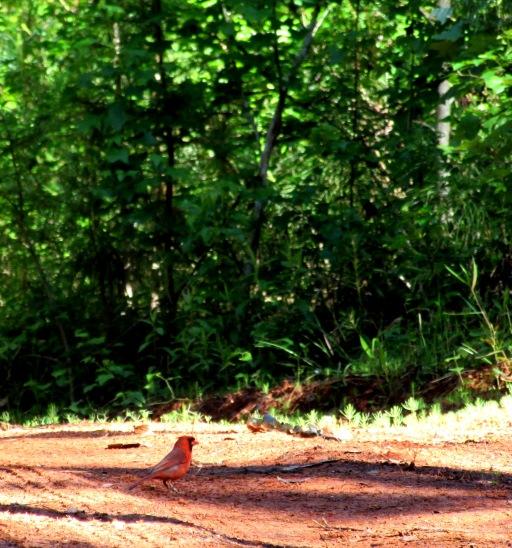 walk bird