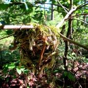 walk nest