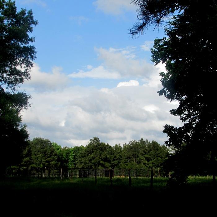 walk meadow