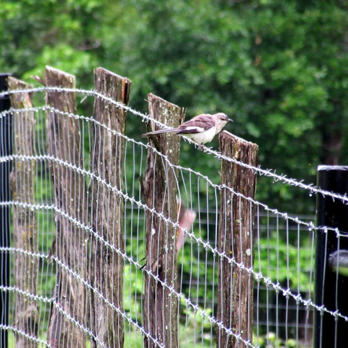 walk bird fence