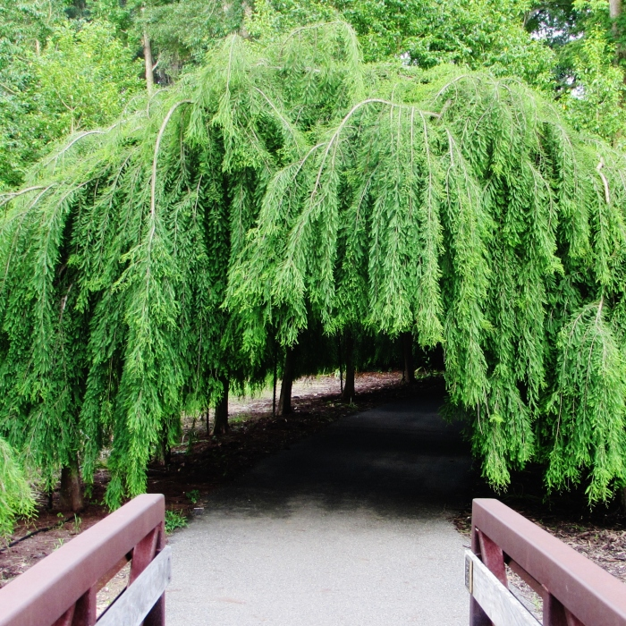 walk garden trees