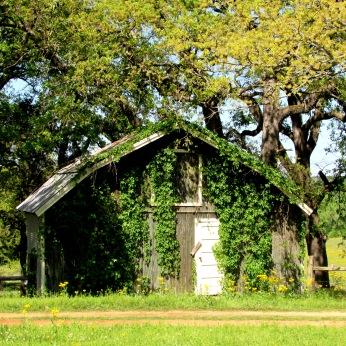 pawpaw's barn