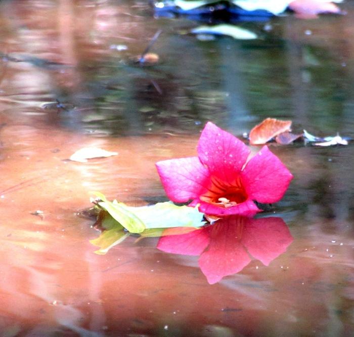 walk water flower