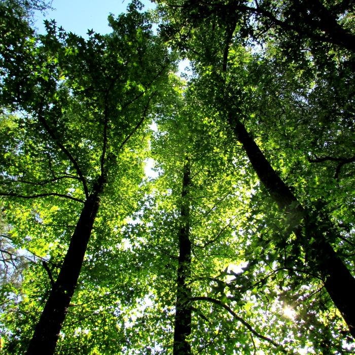 walk trees