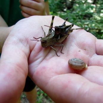 walk grasshopper