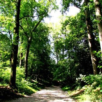 walk washington