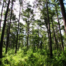 walk tree foret