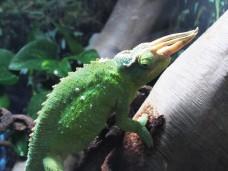 beach lizard