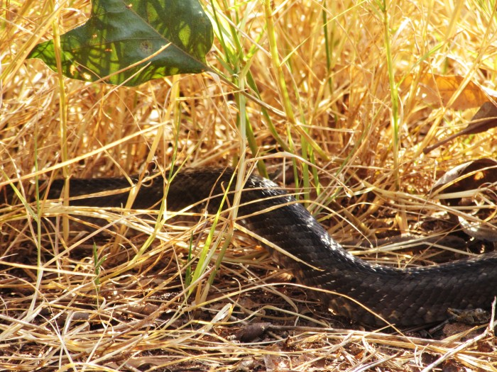 walk snake