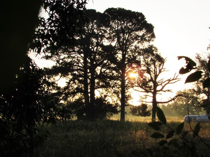 walk sunrise