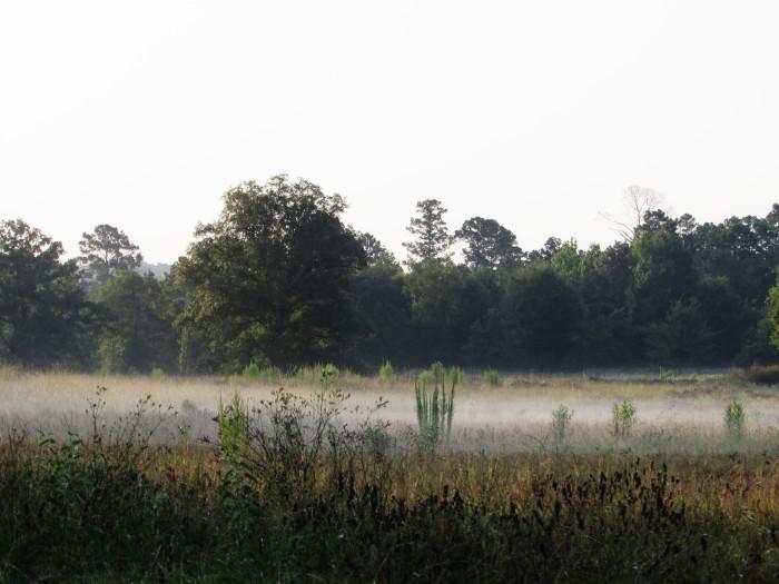 walk mist