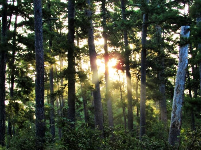walk sunrise trees