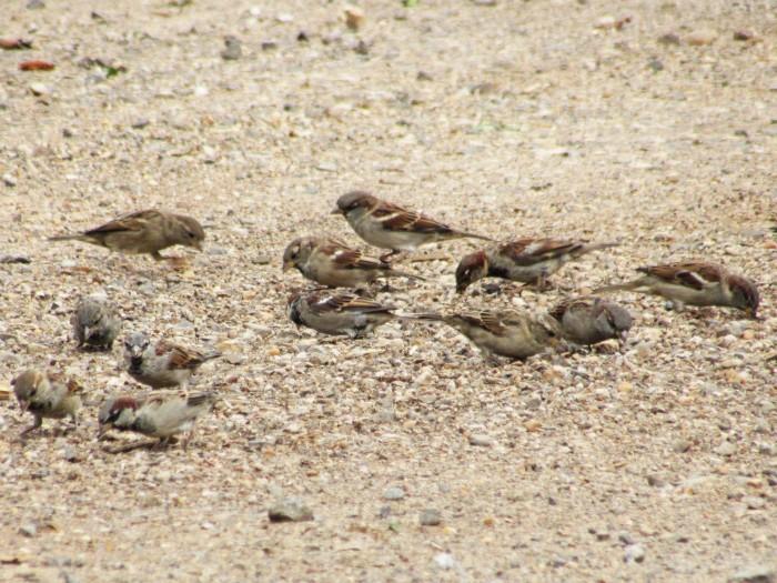 walk birds