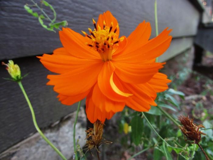 walk rusk flower