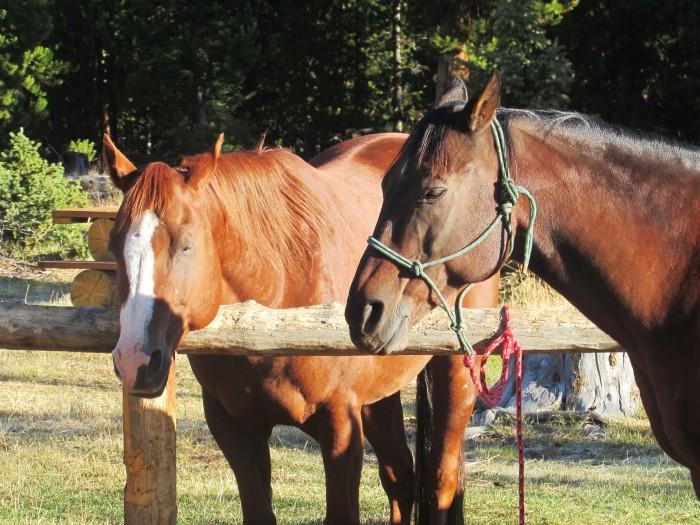 horses elk camp