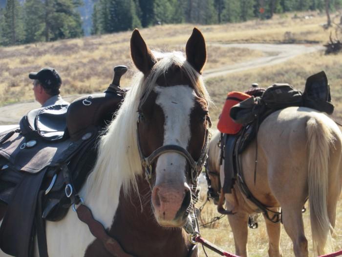walk wy horse