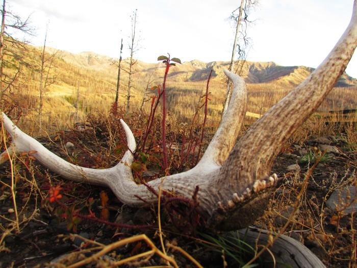 walk wy elk shed