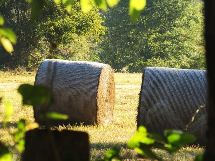 walk hay