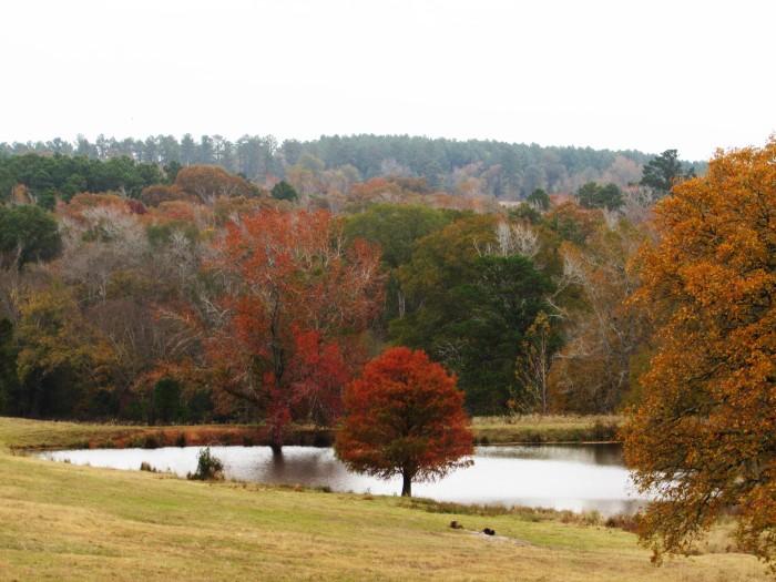 walk meadow pond