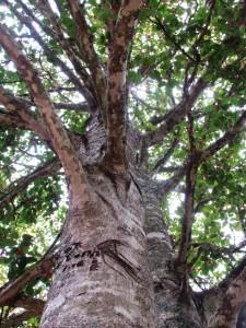 walk tree