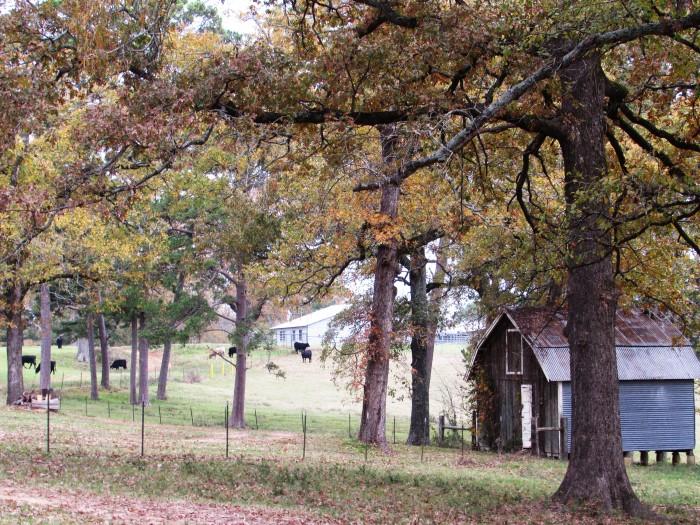 walk barn meadow