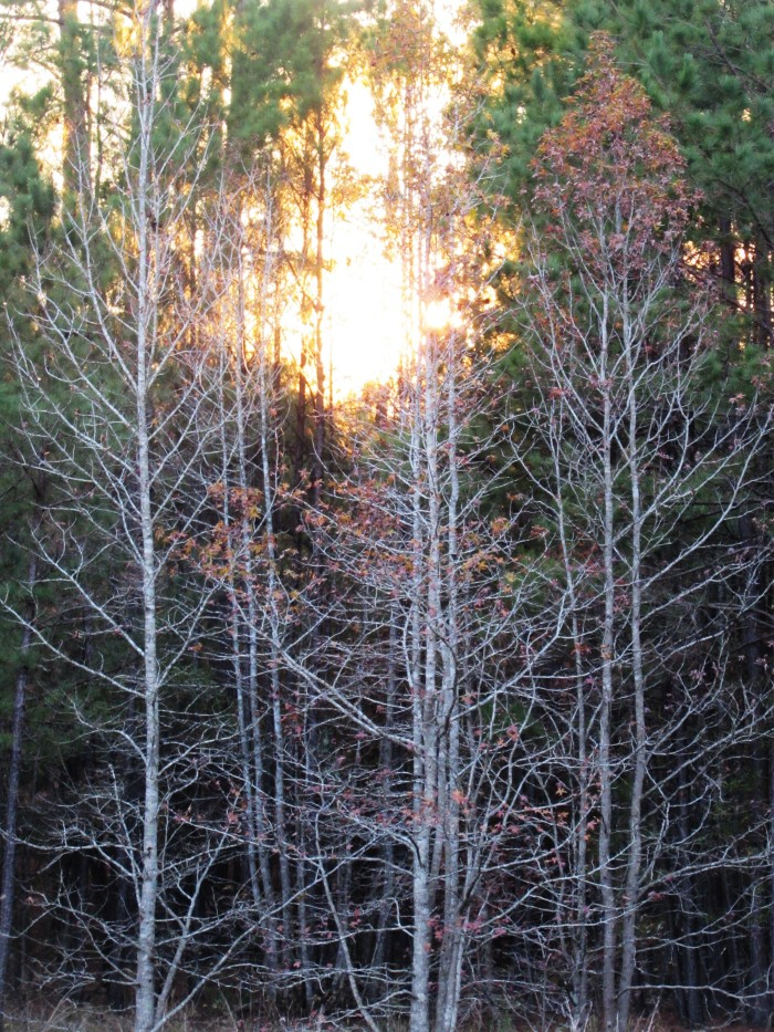 walk tree sun