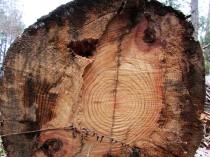 walk tree log