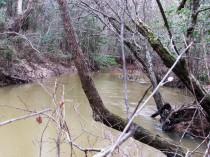 walk creek