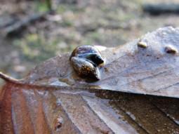 walk snail
