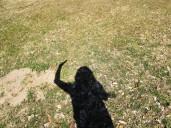walk addie