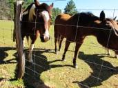 walk horses addie
