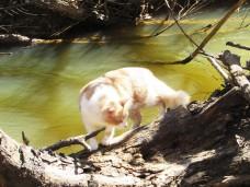 walk peaches creek