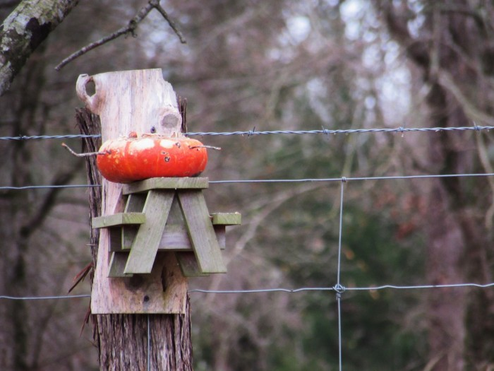 pumpkin bird