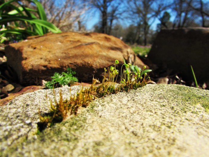 walk rock moss