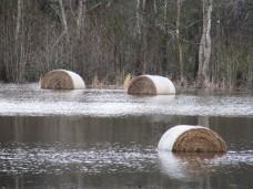 flood hay