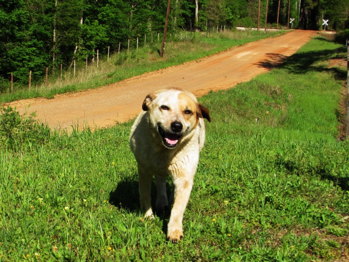 walk dog nosey