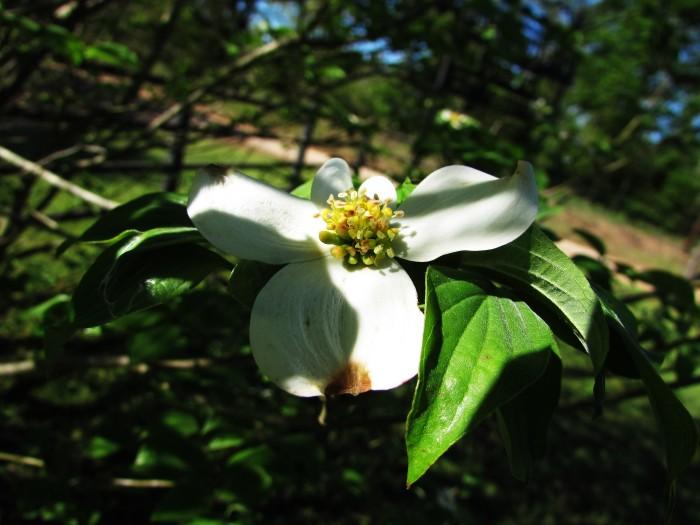 walk tree flower