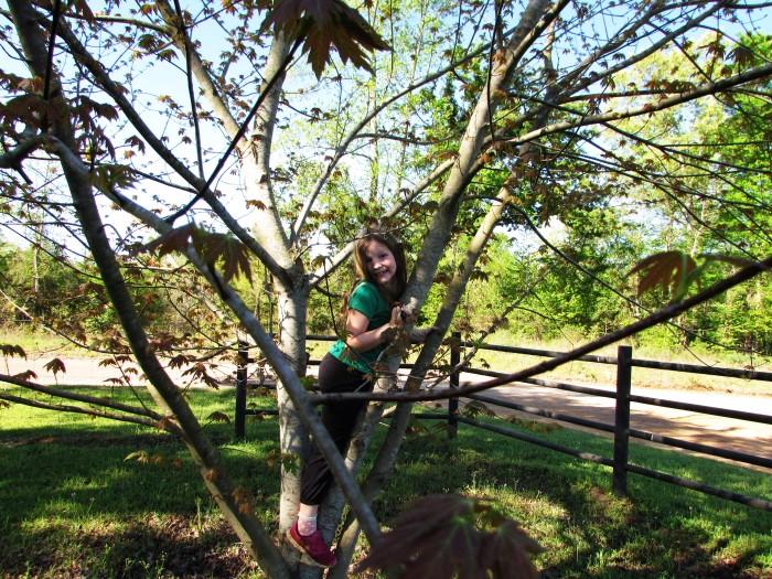 walk tree addie