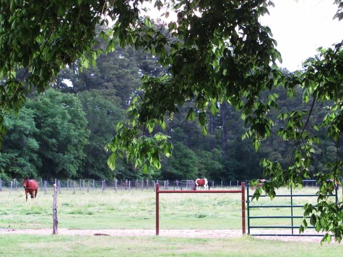 walk pasture horses