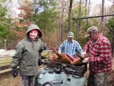 One less pig outdoors and freezer bound!