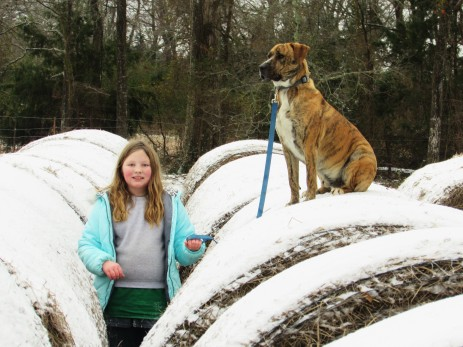 Snow makes hay bales more fun!